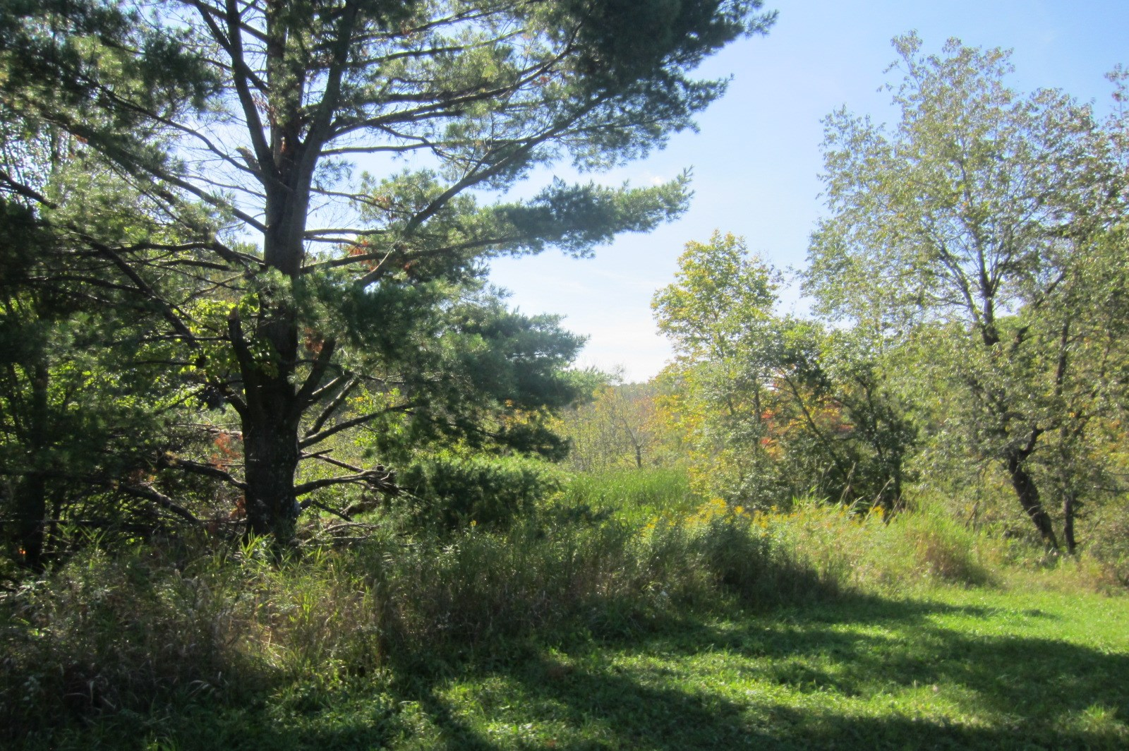 Hunting Land for Sale in Manawa, WI