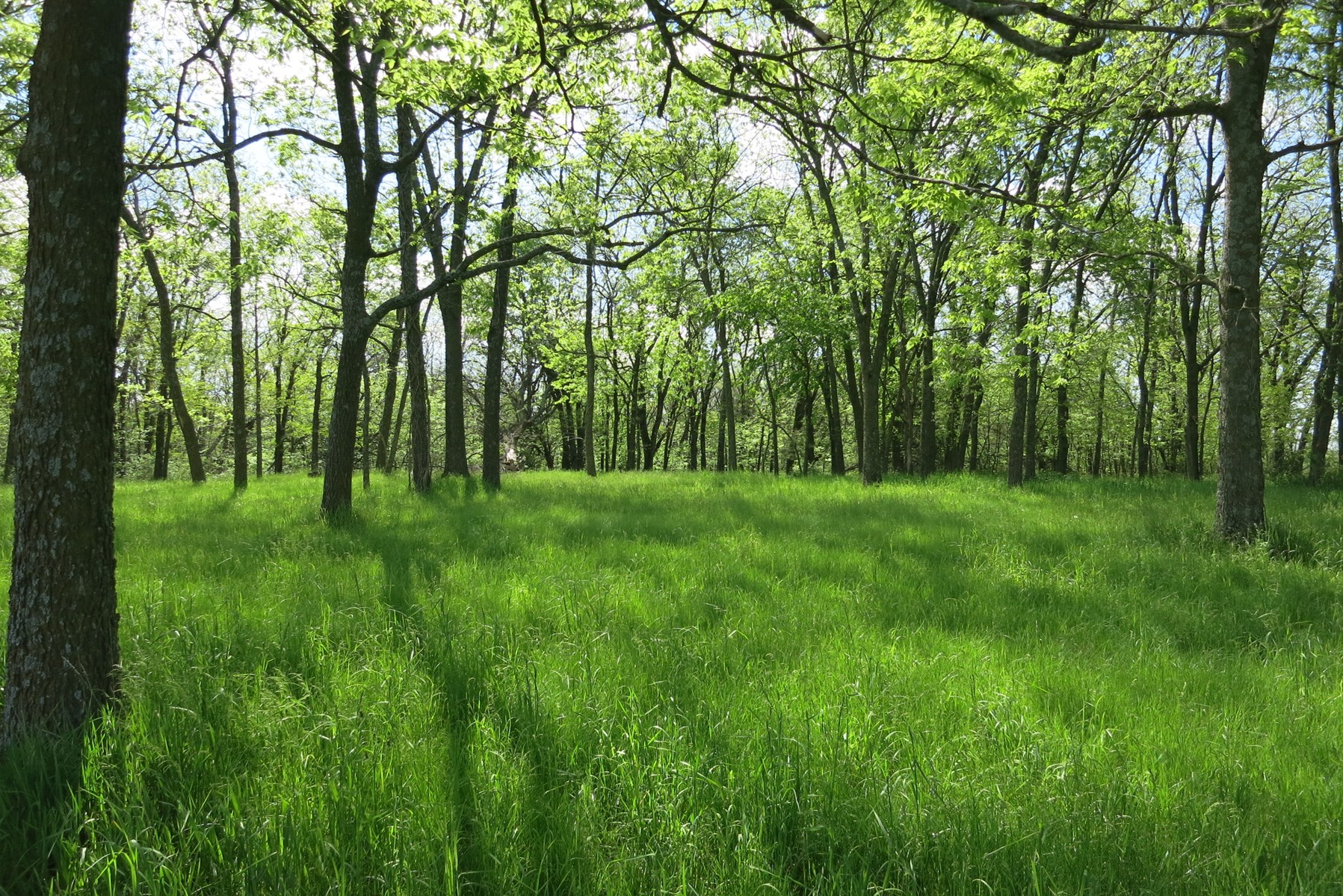 Hunting Land with Income in Northwest Missouri