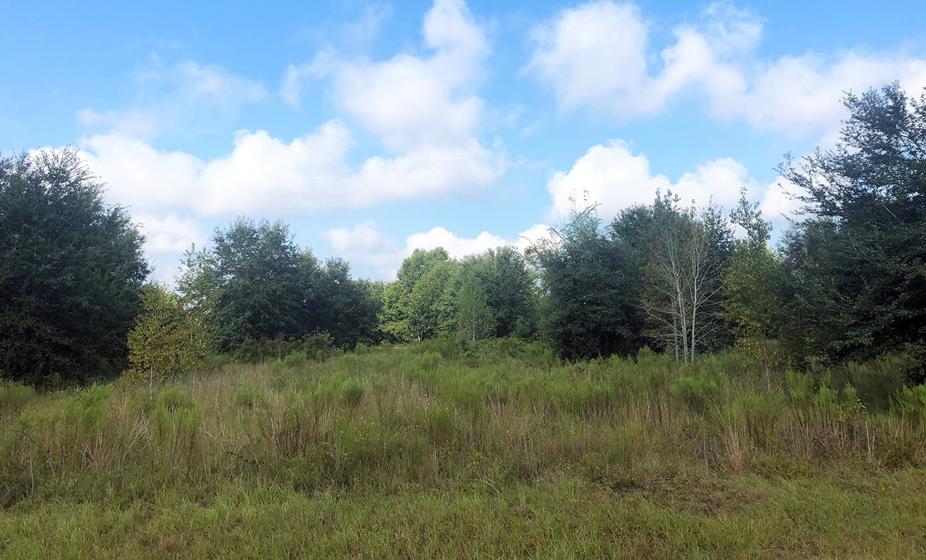 VERY NICE 5 ACRE CORNER LOT ON PAVED ROAD!
