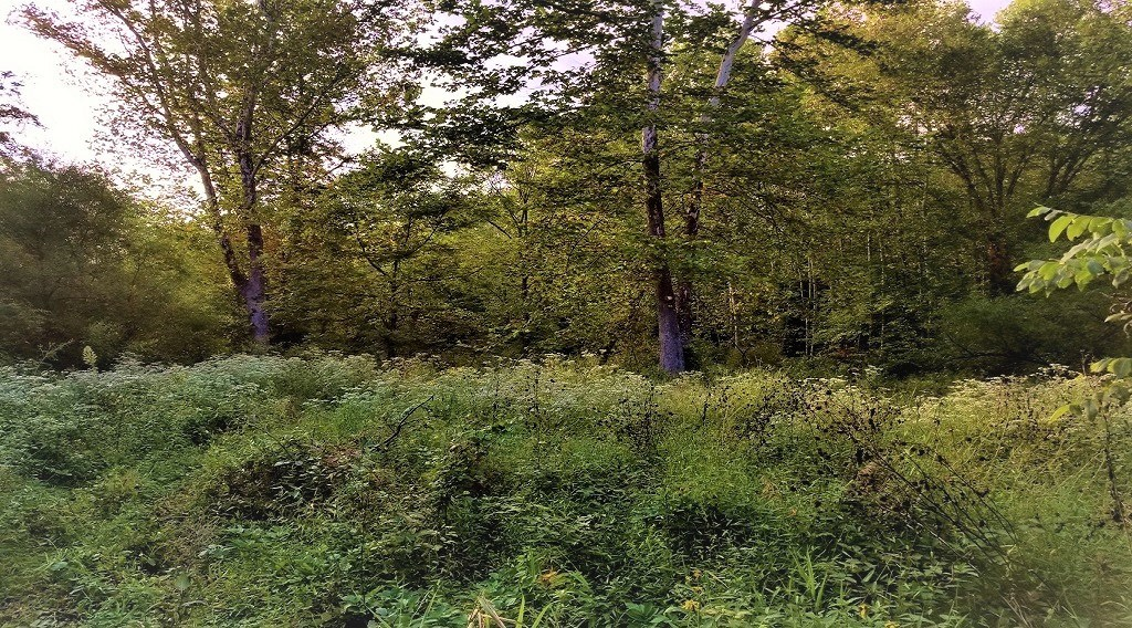 Remote 55 Acre Hunting land located in Gallia County Ohio