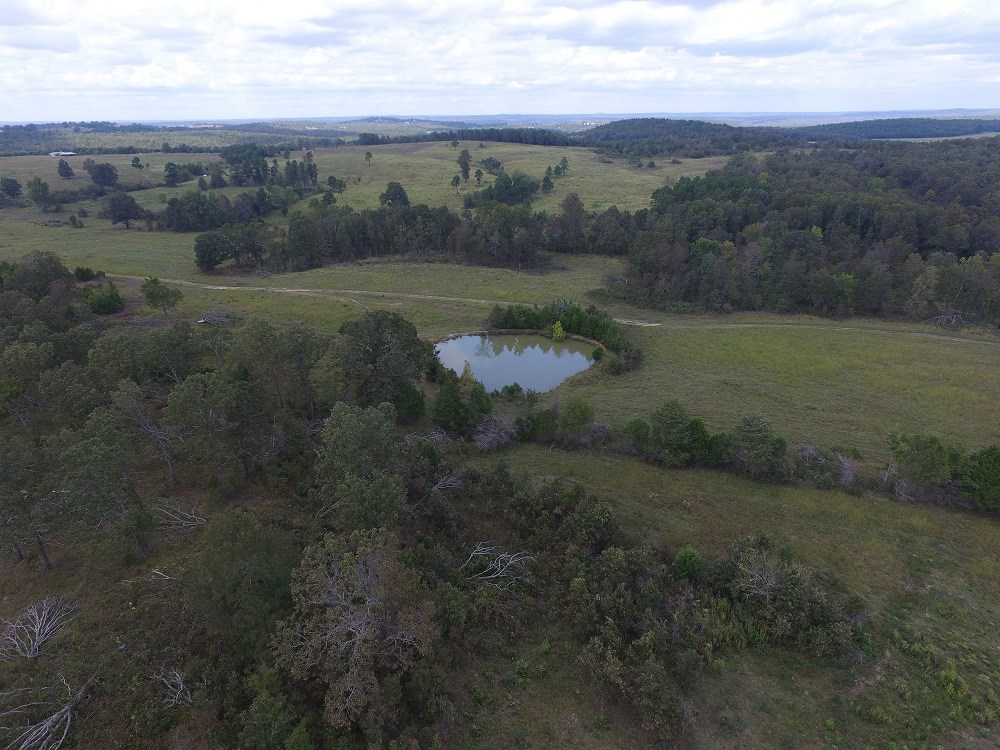 115 ACRE CATTLE FARM FOR SALE IN VIOLET HILL AR