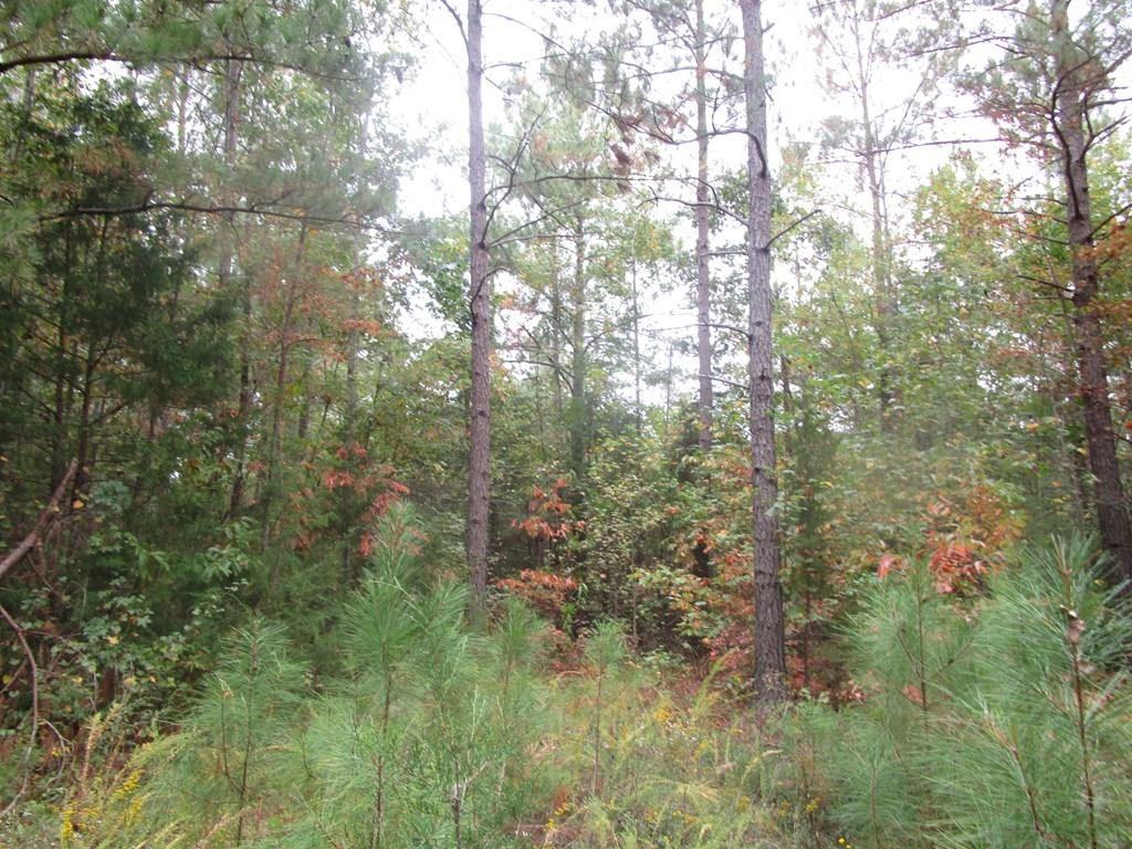 Over 80 Acres In Southern VA