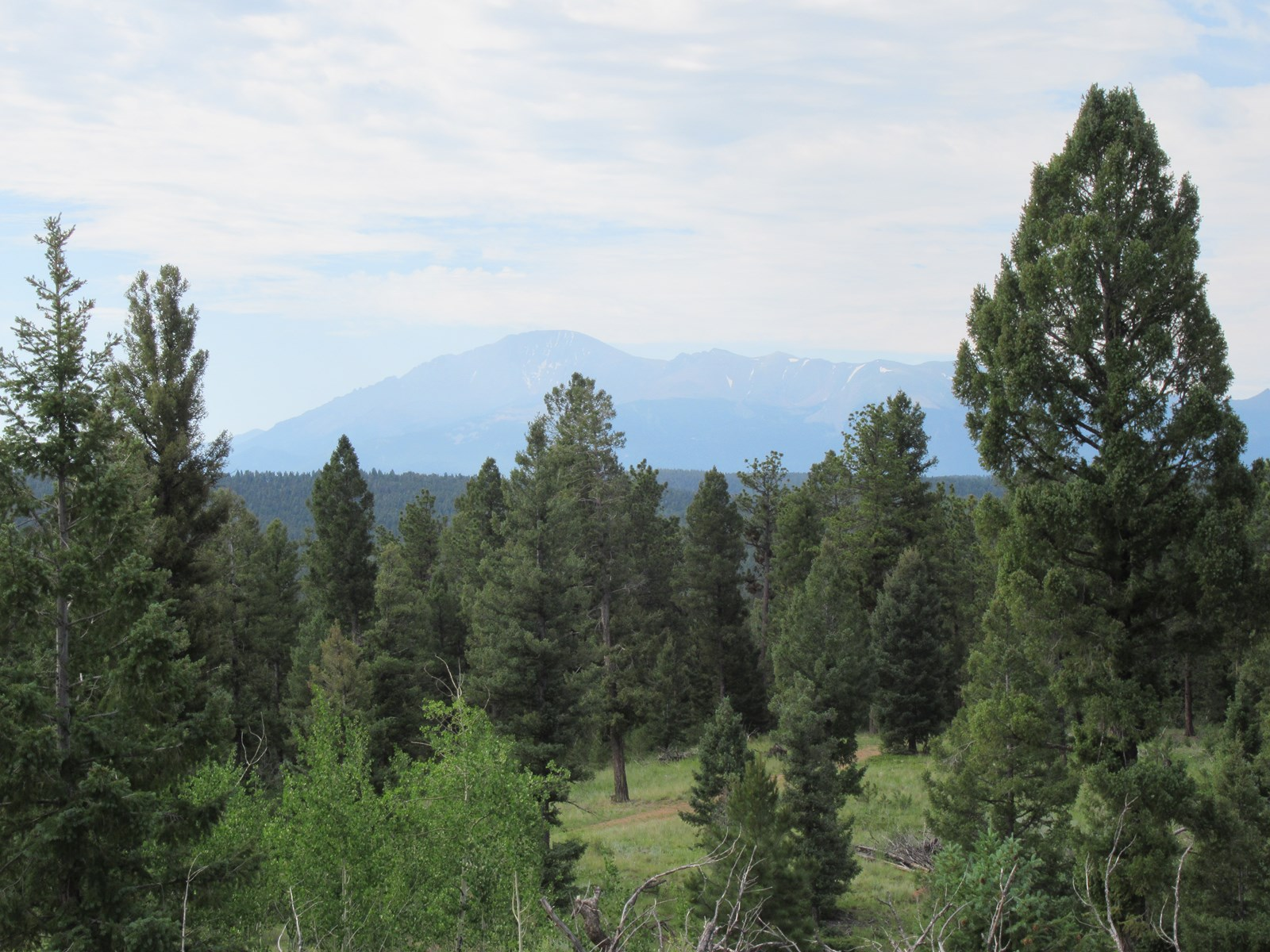 35 Acres in Woodland Park Colorado Bordering National Forest