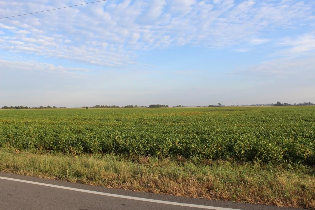 Highly Tillable Farm Land Auction in Pemiscot County MO