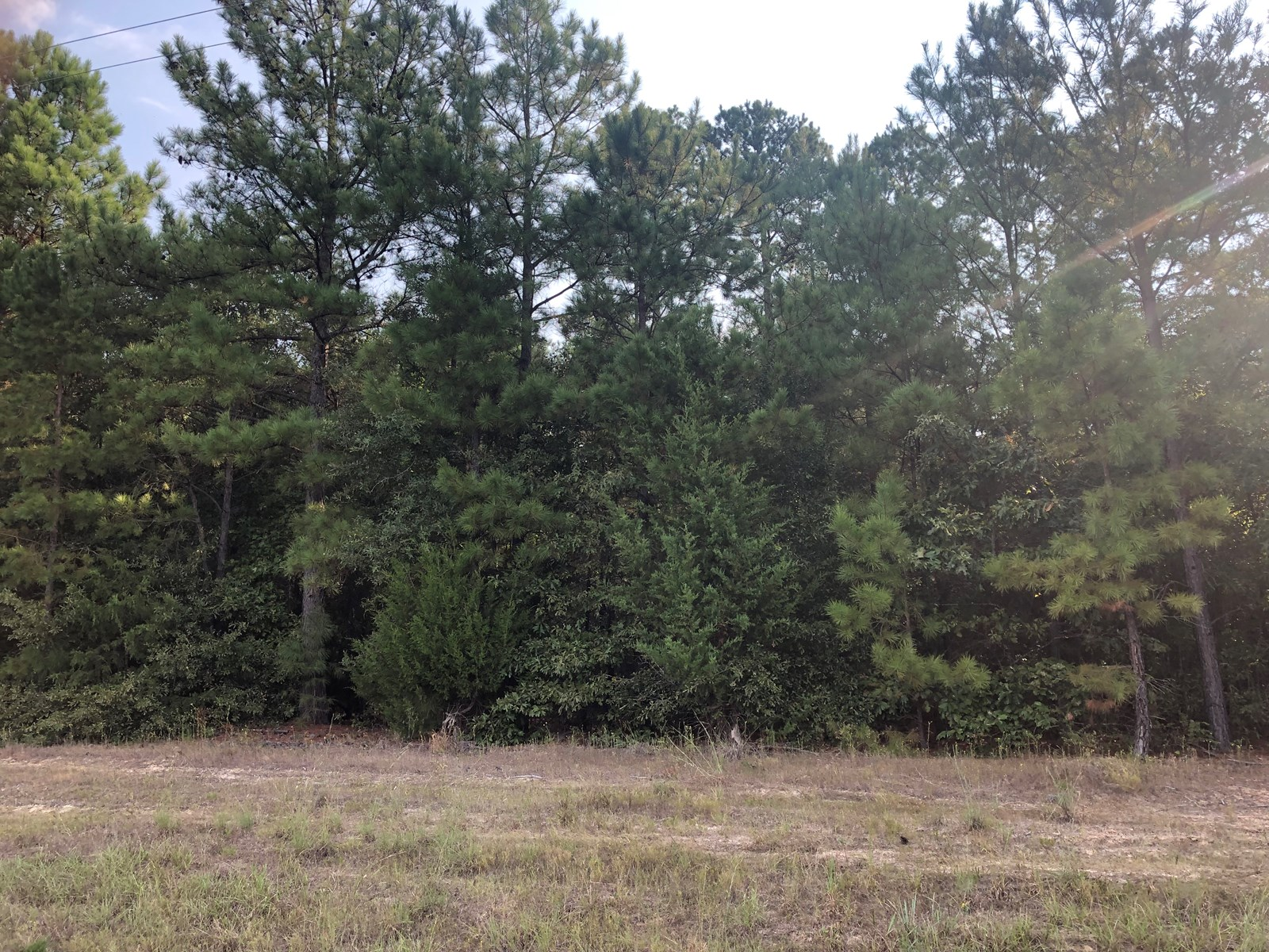 Timberland Tract Homesite East Texas Land, Cass County