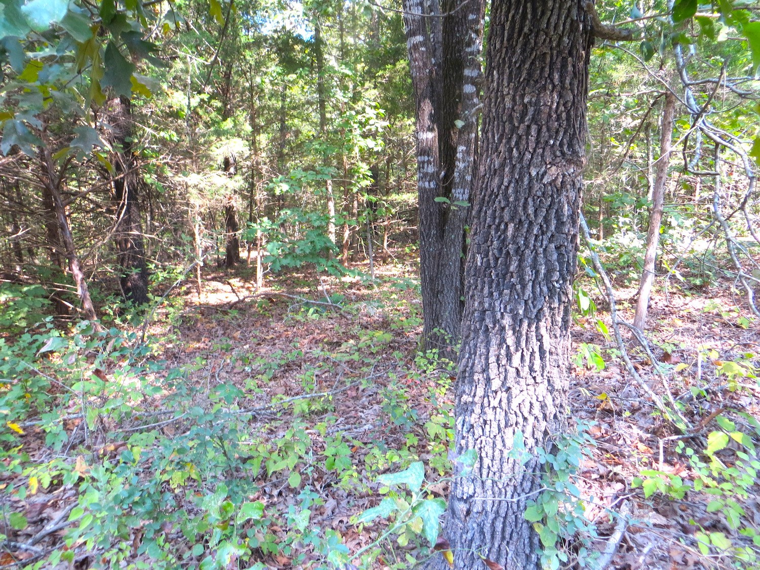 Land for Sale in Mammoth Spring AR