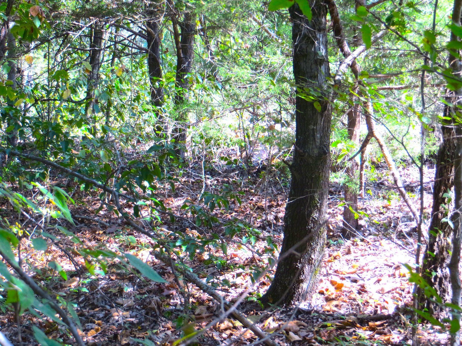 Property for Sale in Mammoth Spring, AR