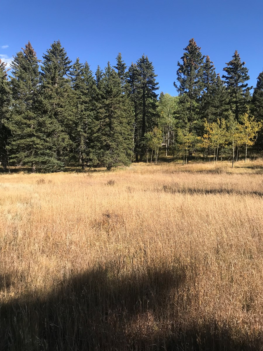 Beautiful 2 Acre parcel for sale in Divide, Colorado
