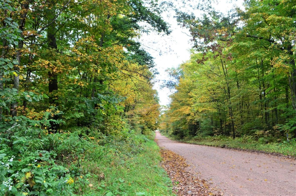 120 Acre Marathon County WI Land Auction Online Only
