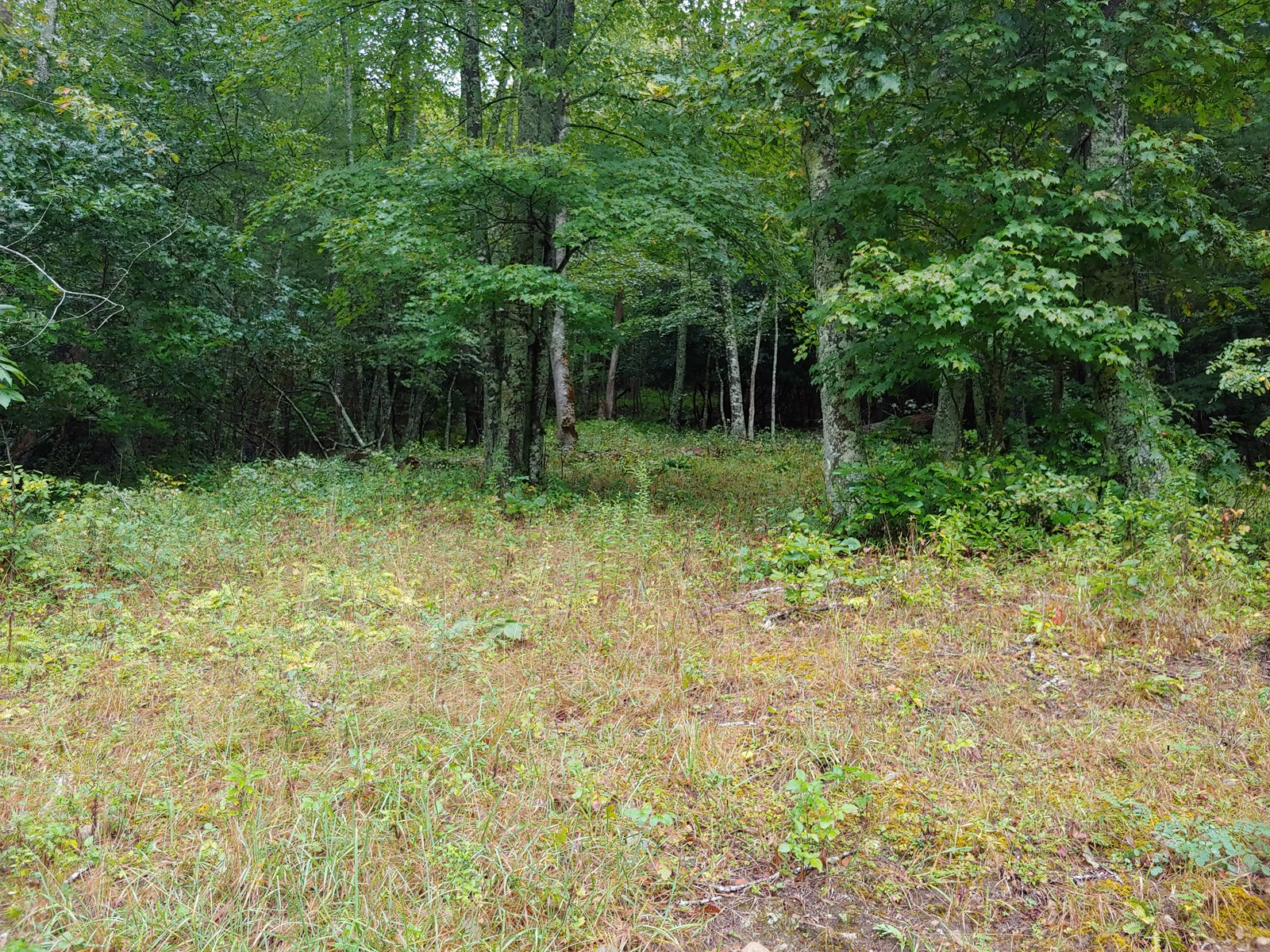 Building Lot for Sale in Fries VA