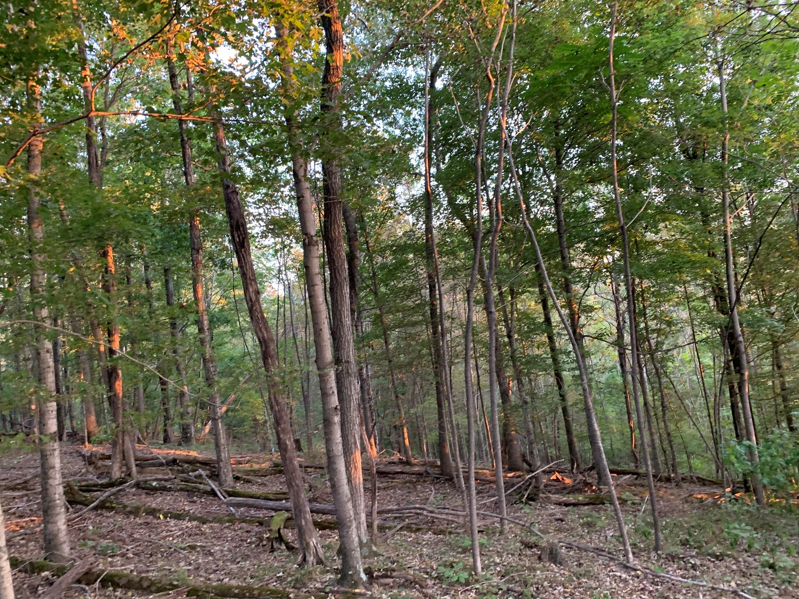 35+/- acres of Secluded Hunting, Recreational land for sale