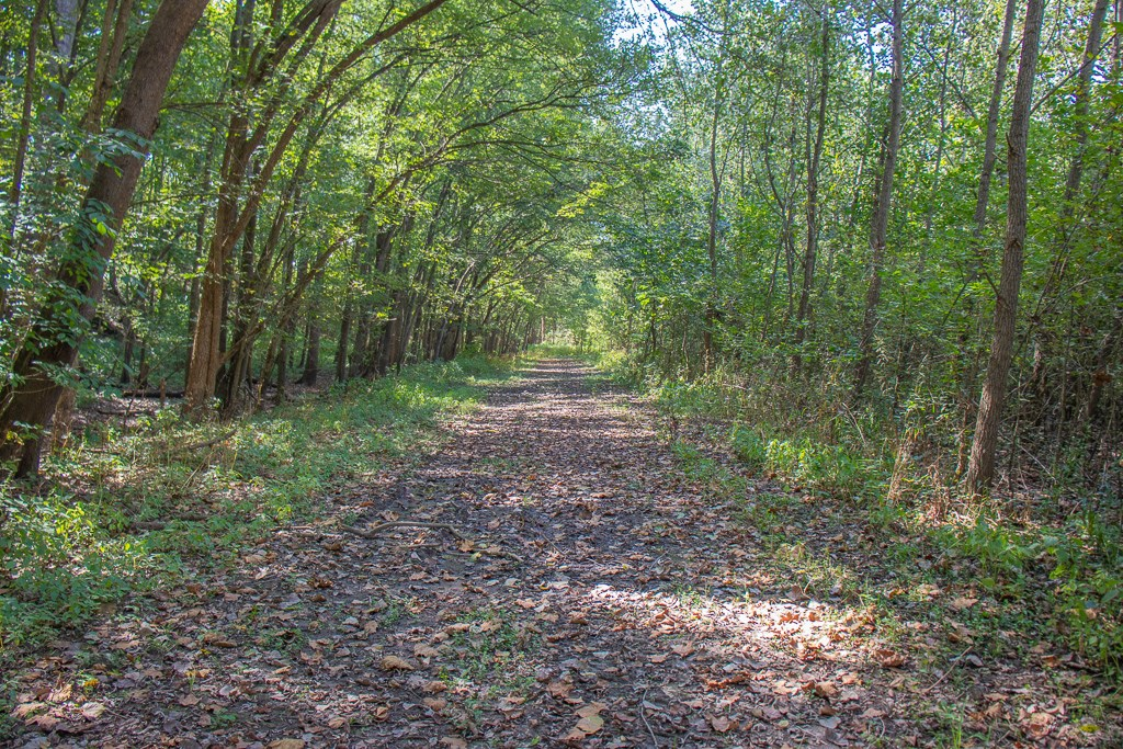 Macoupin County 110 +/- Acre Hunting Property For Sale