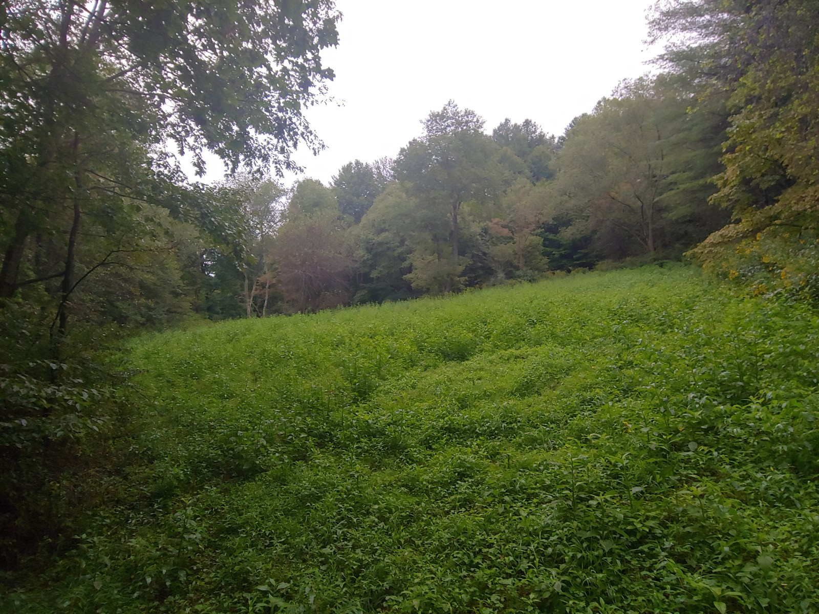 Secluded Land for Sale in Fries VA