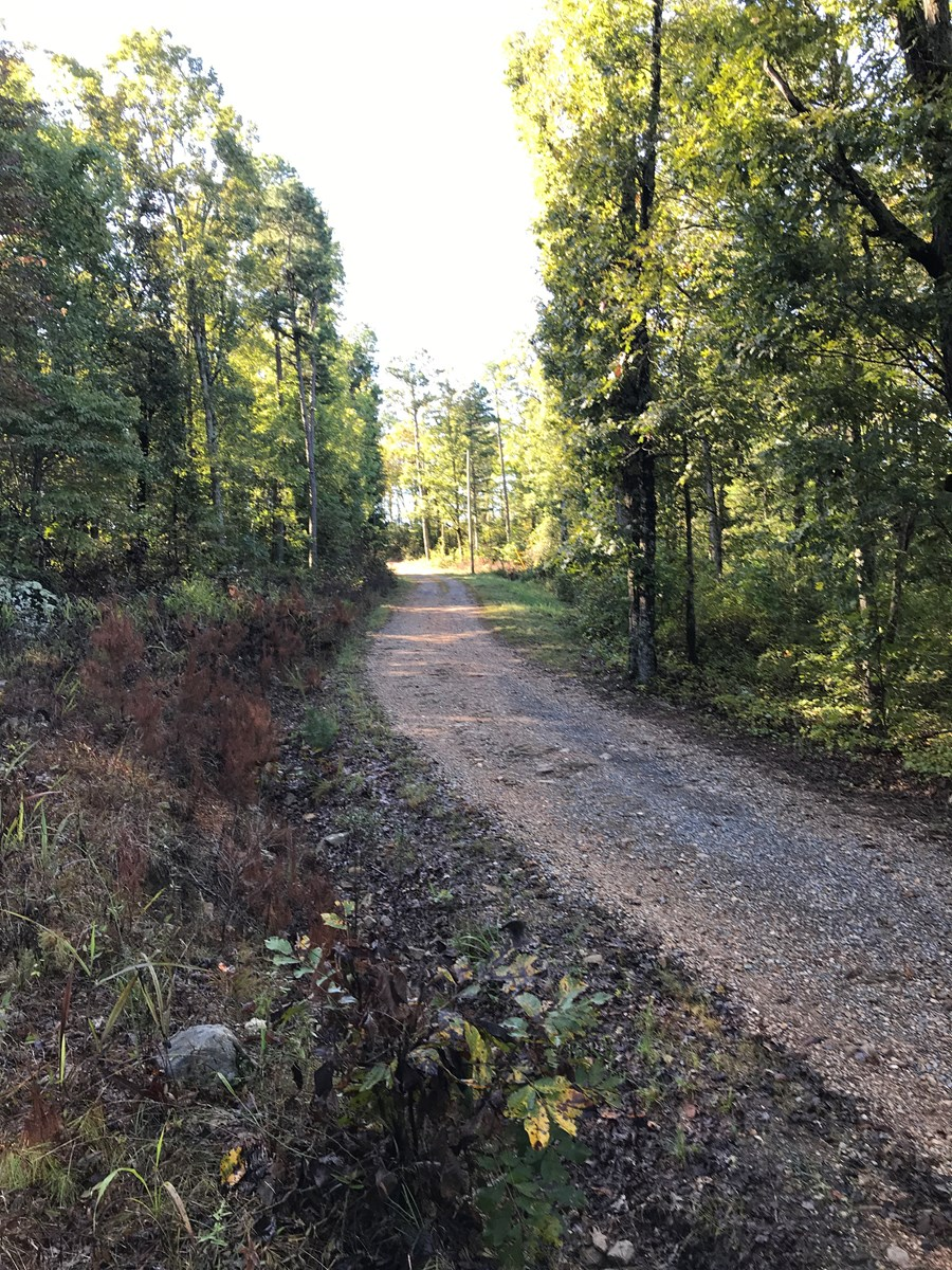 15.5 Acres Arkansas Hunting/Recreational Land For Sale