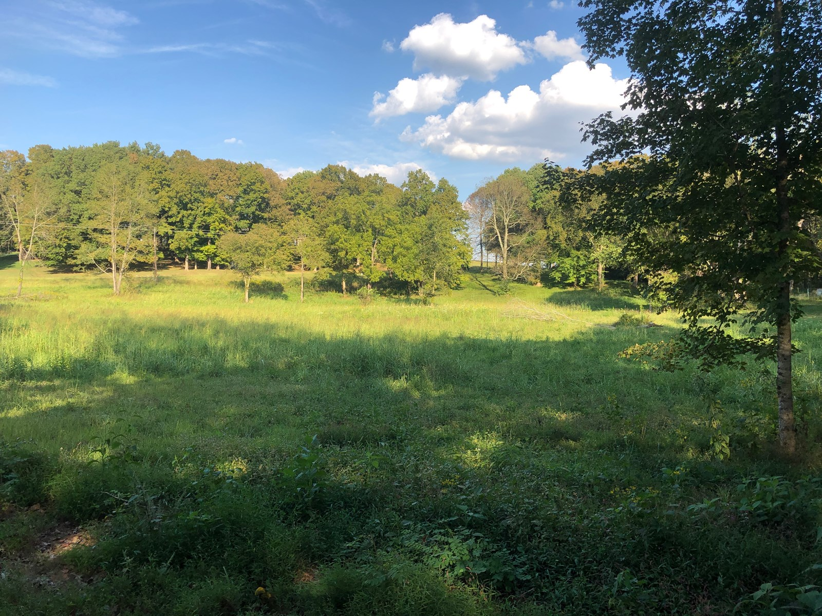NICE 5 ACRE LOT - READY TO BUILD YOUR COUNTRY HOME?