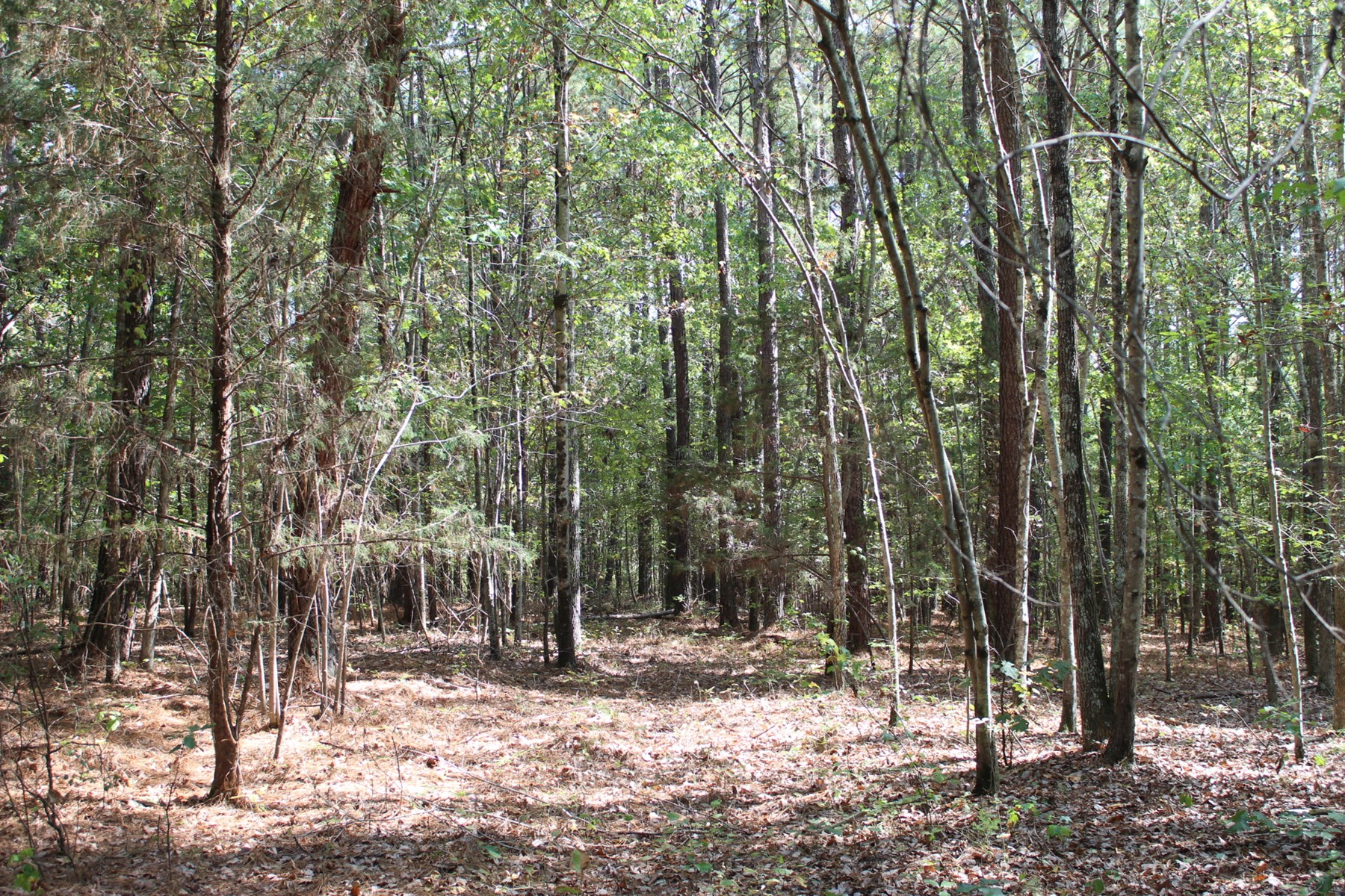 LAND FOR SALE IN MCNAIRY COUNTY TN - 11 ACRES