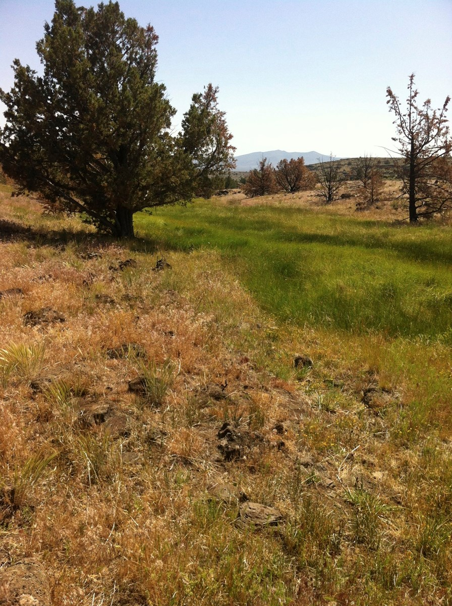 320+/-Acres w/Views/Springs/Wildlife/Borders BLM/Northern Ca