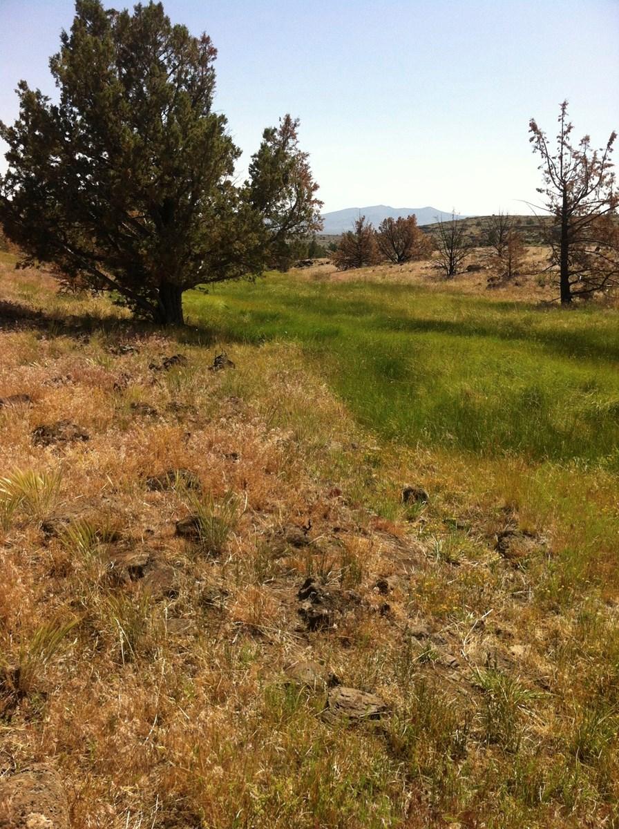 320+/-Acres w/Views/Springs/Wildlife/Borders BLM/Northern Ca
