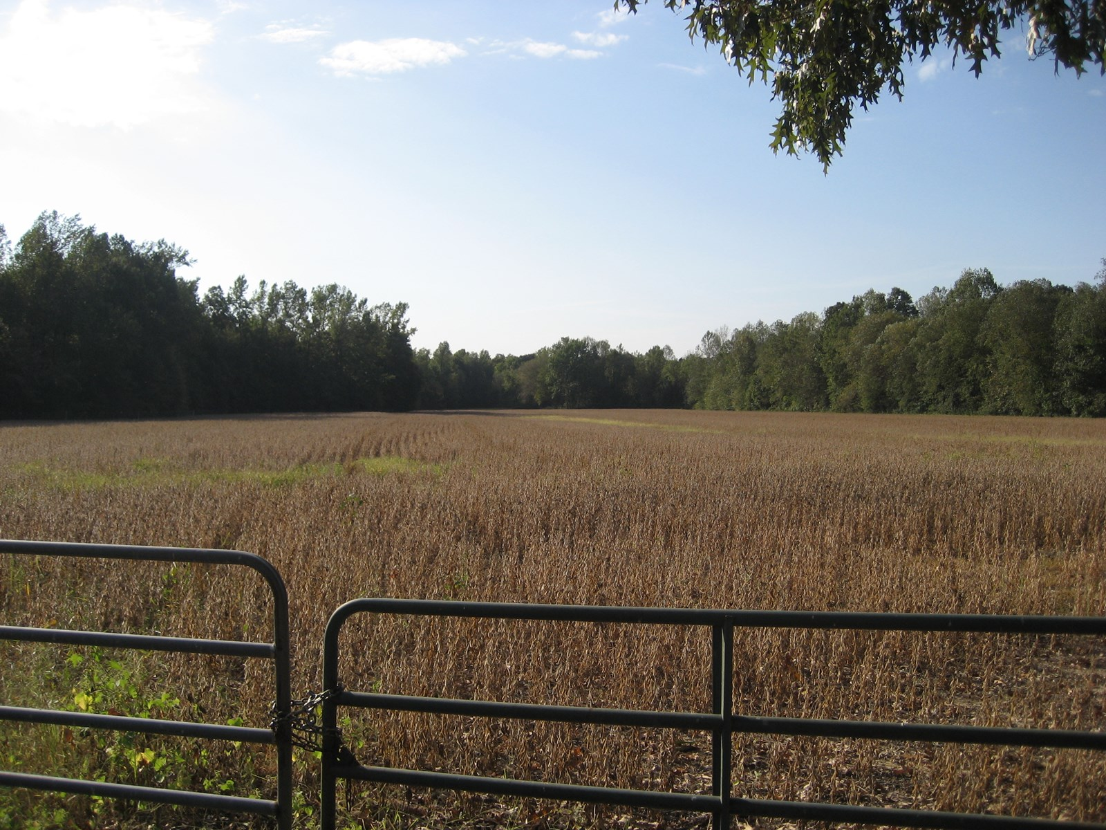 HUNTING LAND FOR SALE IN TENNESSEE, ROW CROP LAND  FOOD PLOT