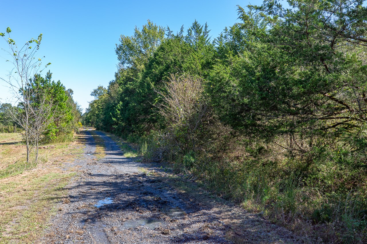 8.95 Acre Wooded Building Site
