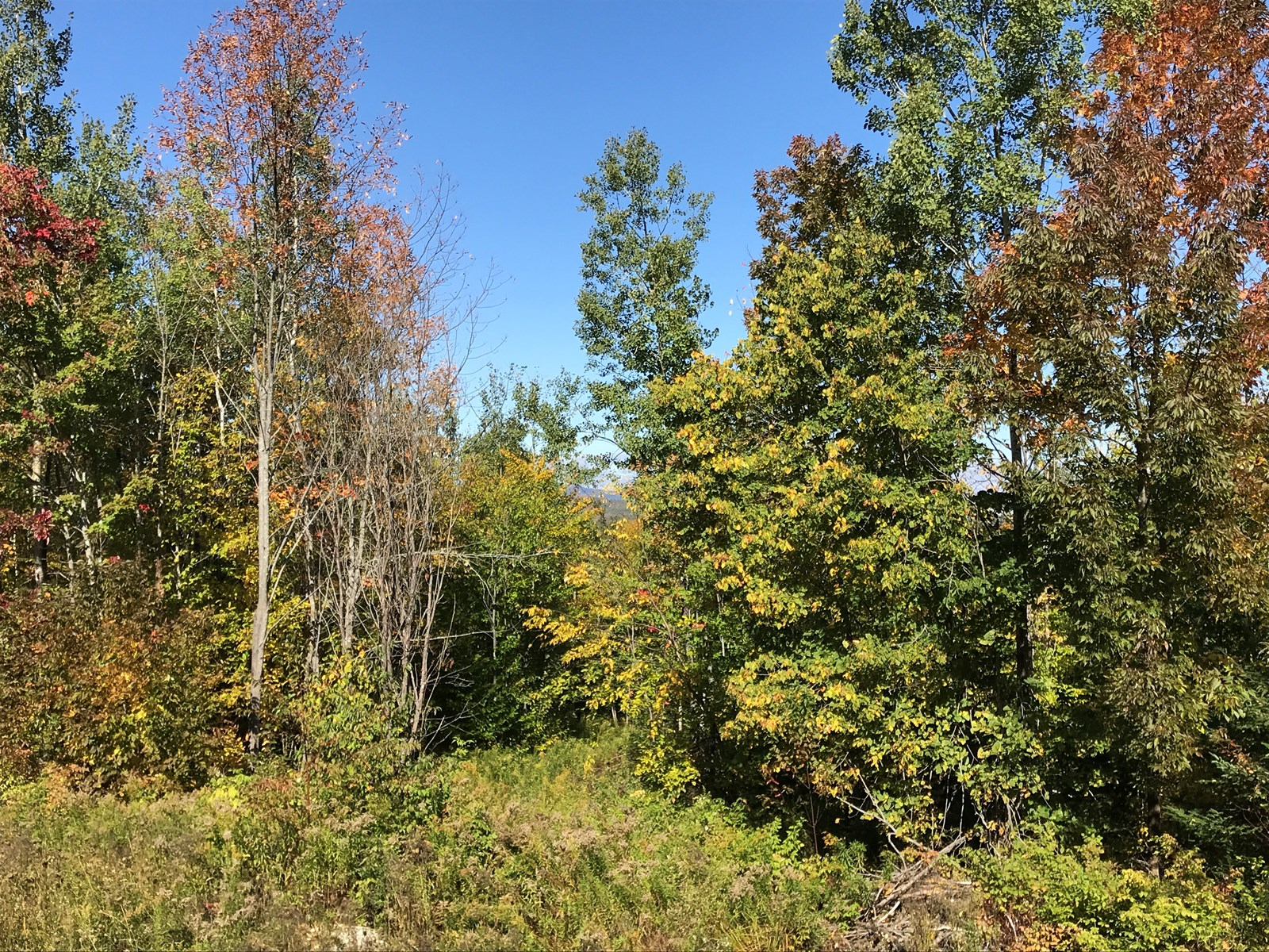 Hunting Property For Sale in Northern Maine