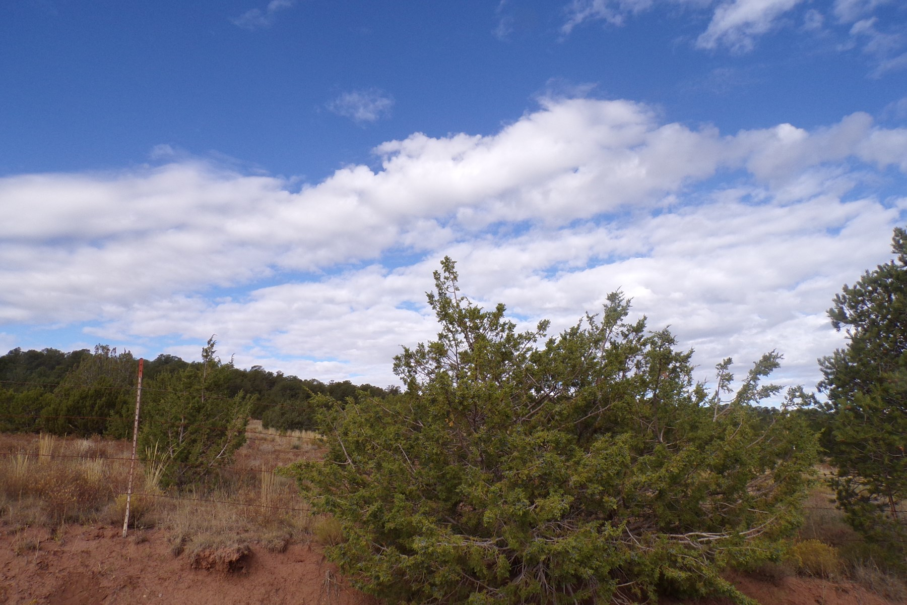 New Mexico Manzano Mountain 10 Acres For Sale