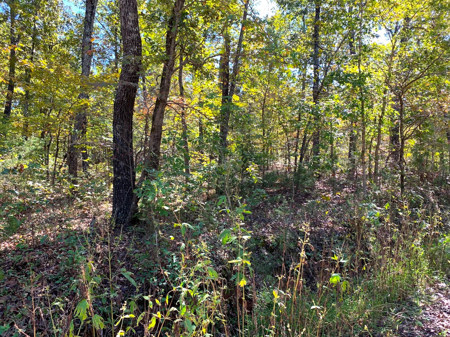 Land for Sale in Fulton County, AR