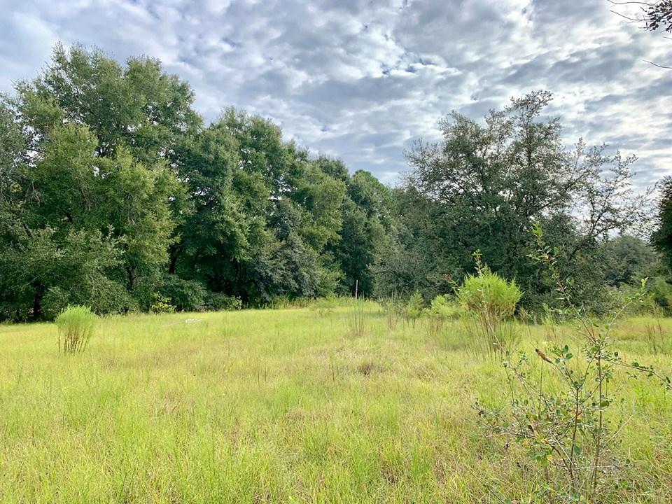 LAND FOR SALE BELL TRENTON GILCHRIST COUNTY FLORIDA