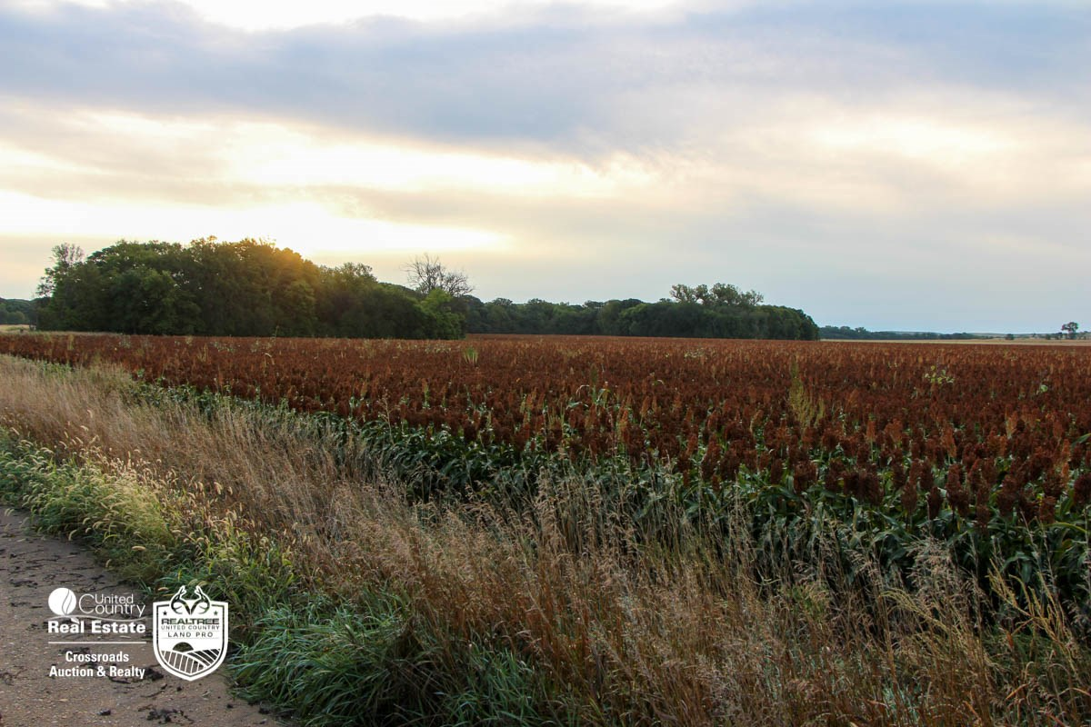 155± Acres of Premium Farmland Auction in Sylvan Grove Kansas