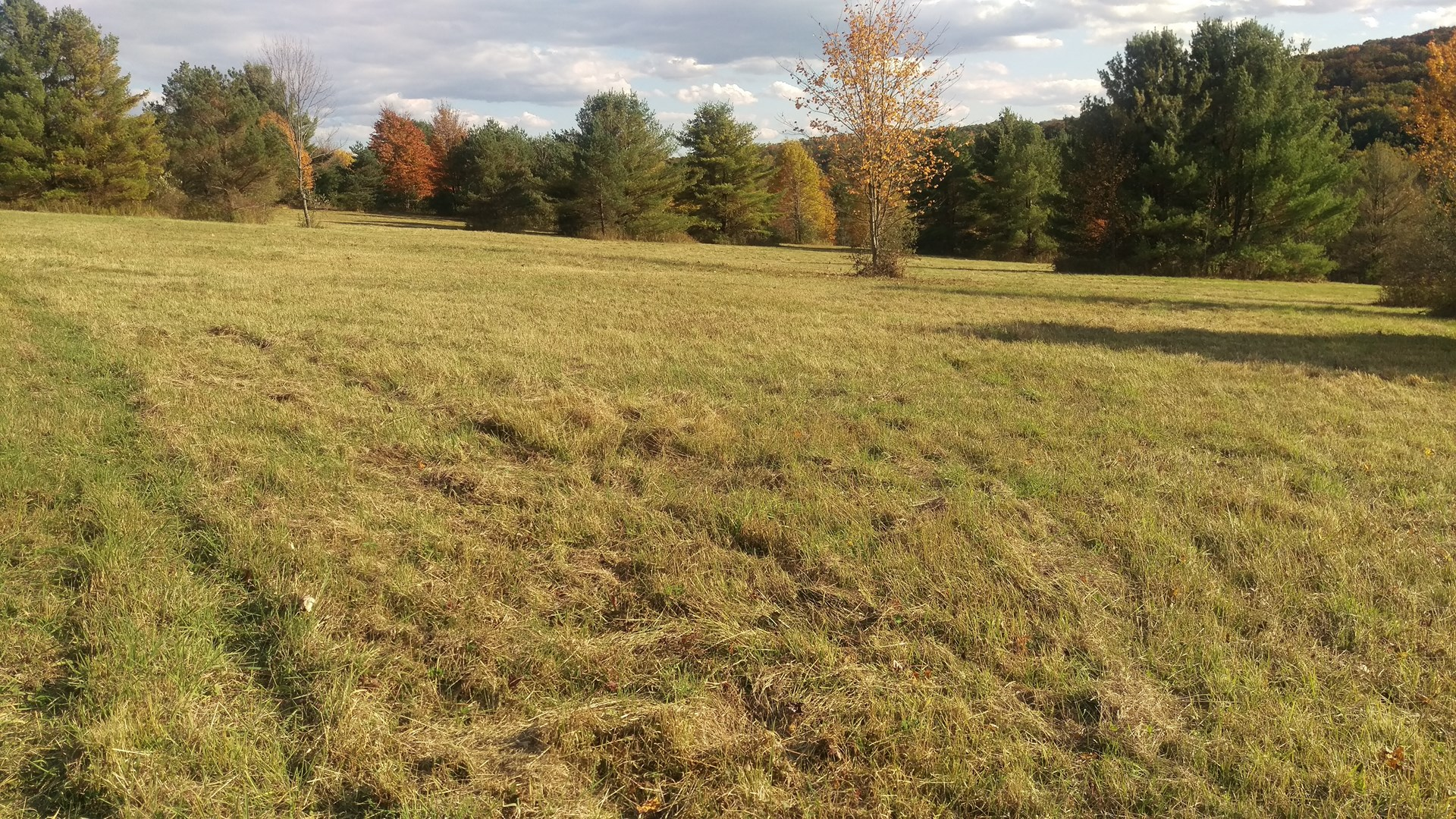 PRIME HUNTING & CAMPING LAND FOR SALE IN CHEMUNG COUNTY, NY