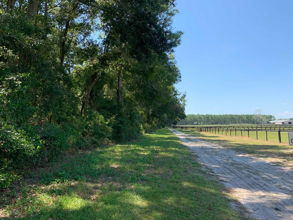 VACANT LAND FOR SALE - BELL, GILCHRIST COUNTY, FLORIDA
