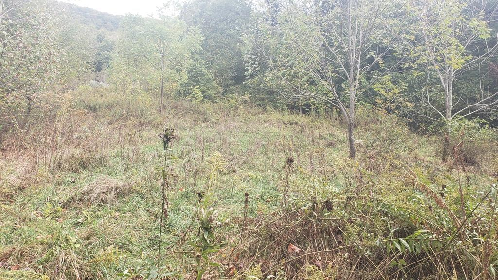 4.99 Acres Hobby Farm Hunting in Thompson Valley Virginia