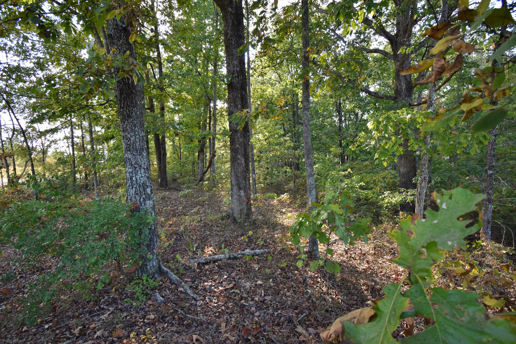 16.68 acres of Vacant Land For Sale in Tennessee.