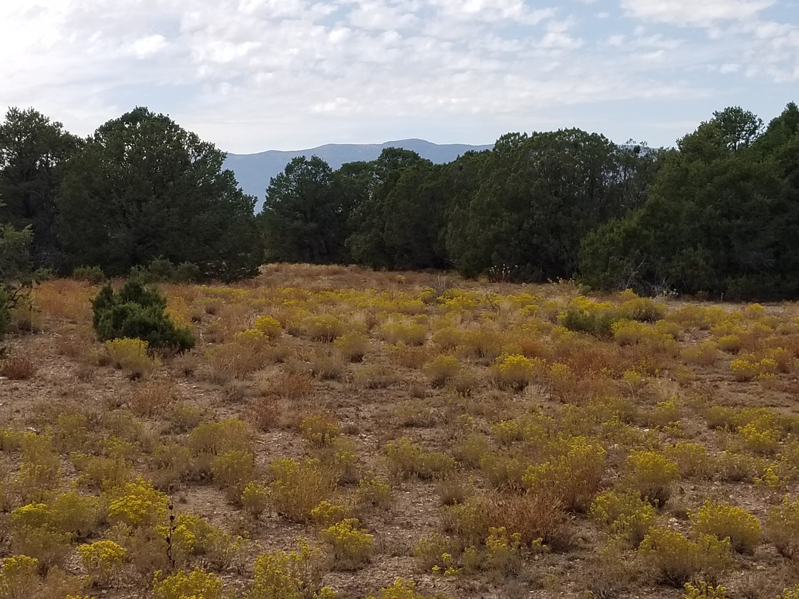 Cedar Crest New Mexico Wooded Acreage For Sale
