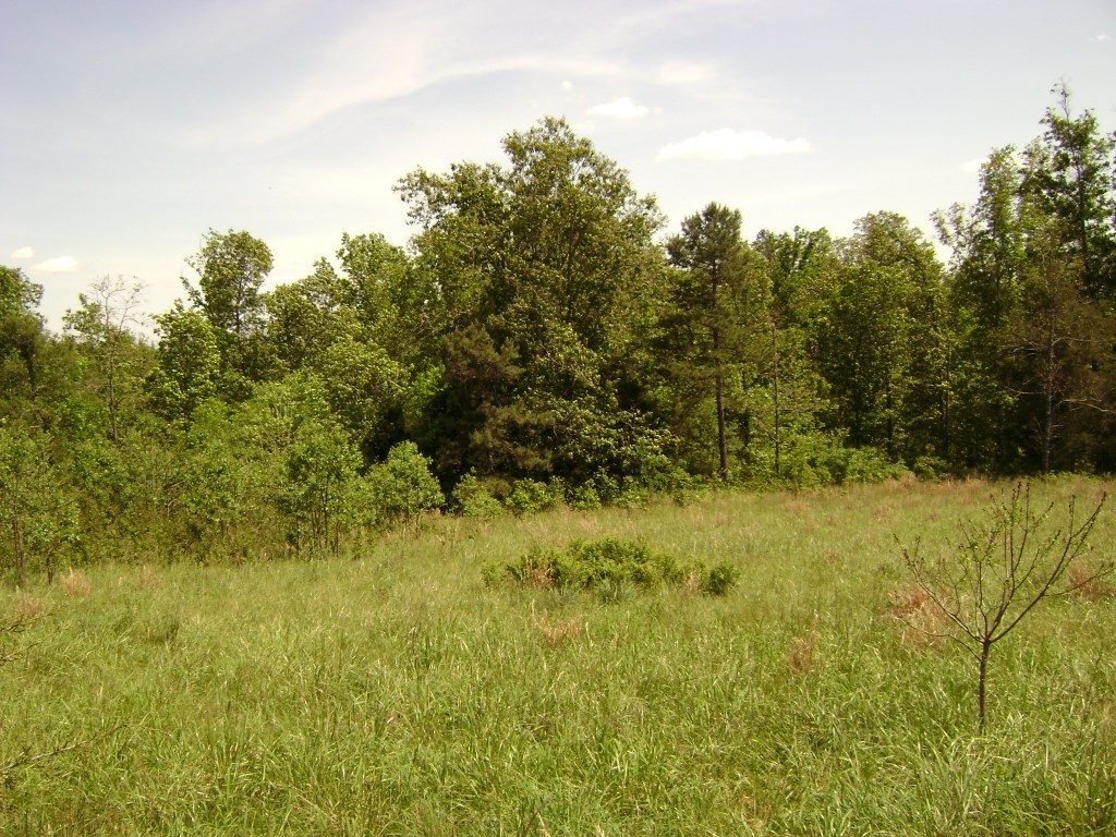 LAND FOR SALE NEAR THE BUFFALO RIVER