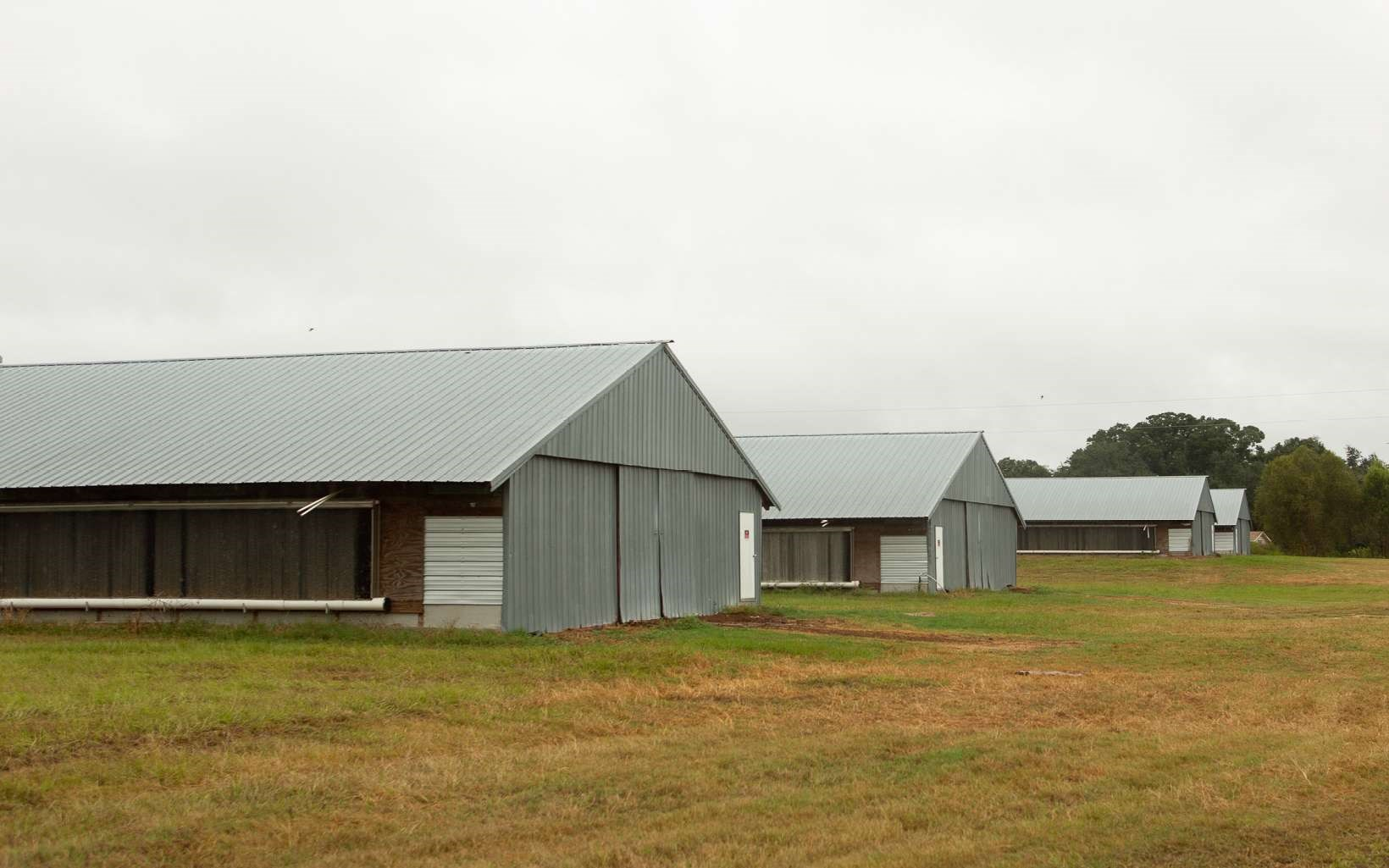 BROILER FARM WITH 4 X 40 X 500 POULTRY BARNS