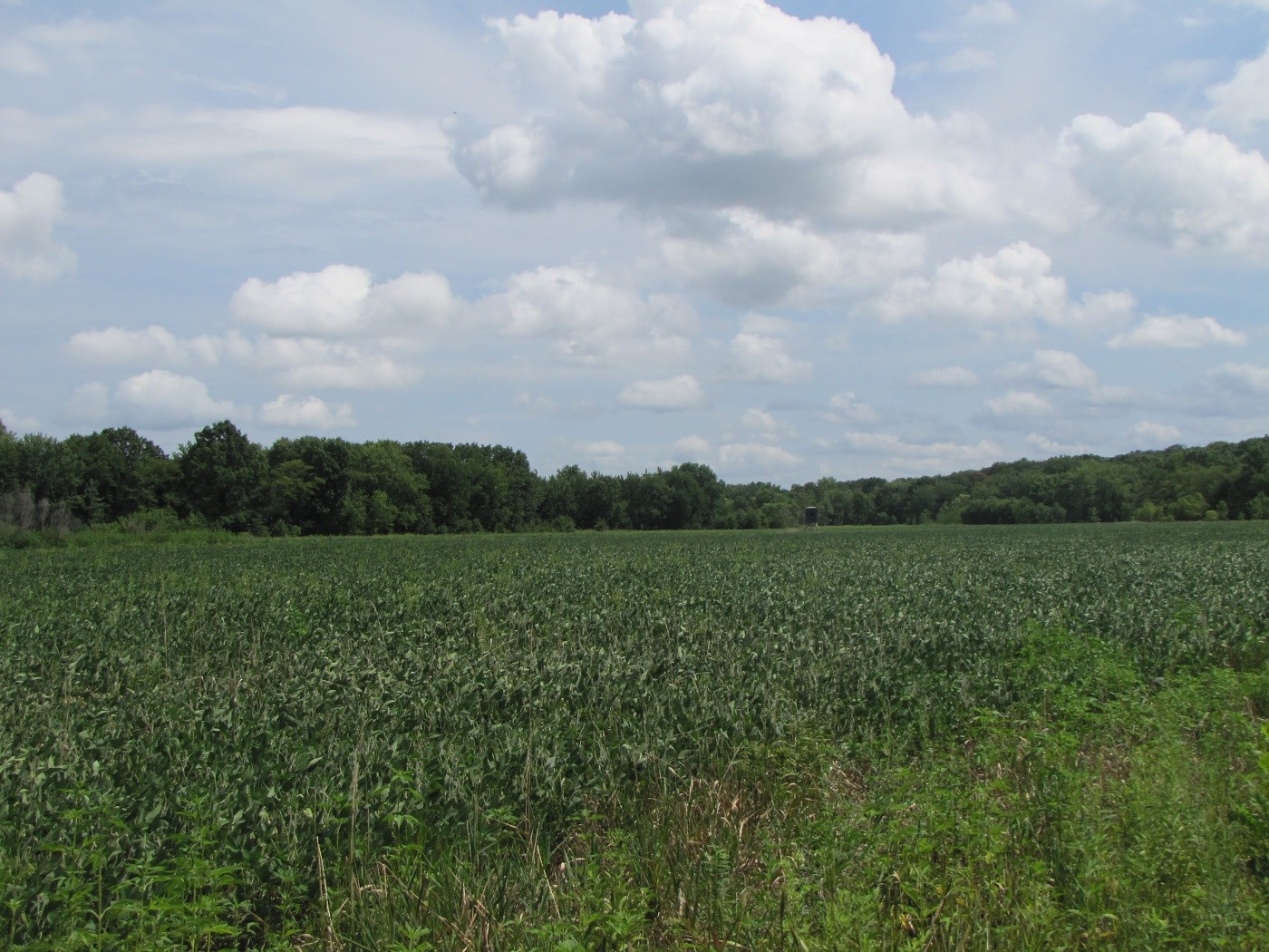 NORTHERN MO LAND FOR SALE, WHITETAIL DEER HUNTING MO
