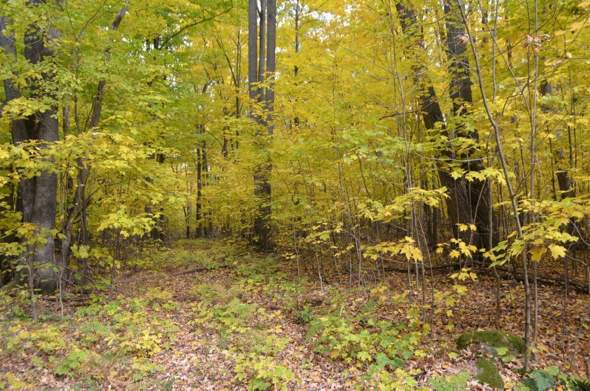 60 Acre Parcel Buildable in Marathon County WI