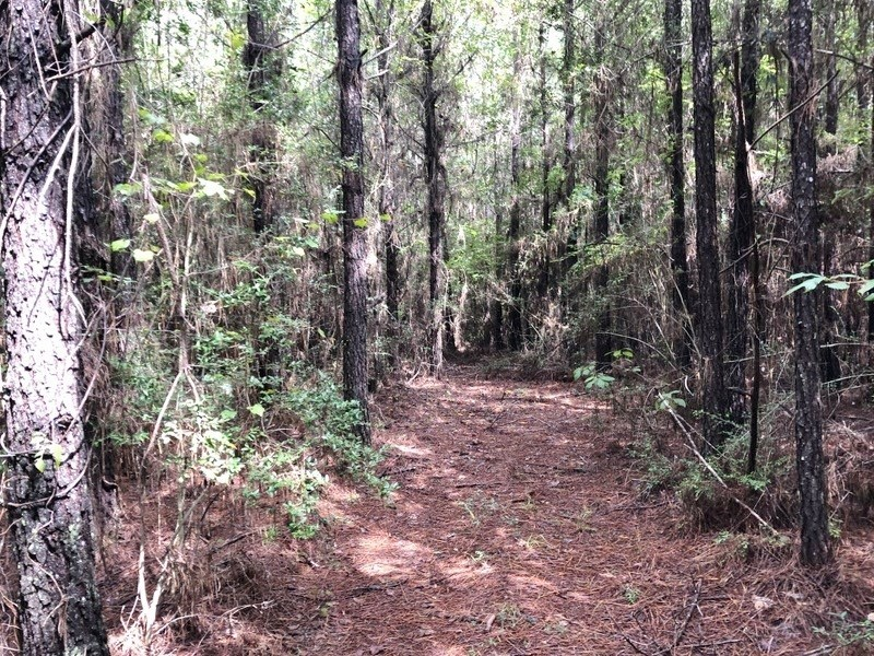 53 Acres Hunting Timber Land for Sale Amite County, MS