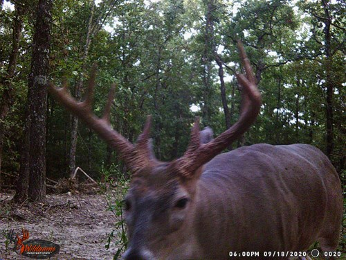 Hunting Land In Missouri For Sale! 80 Acres Vacant Land!