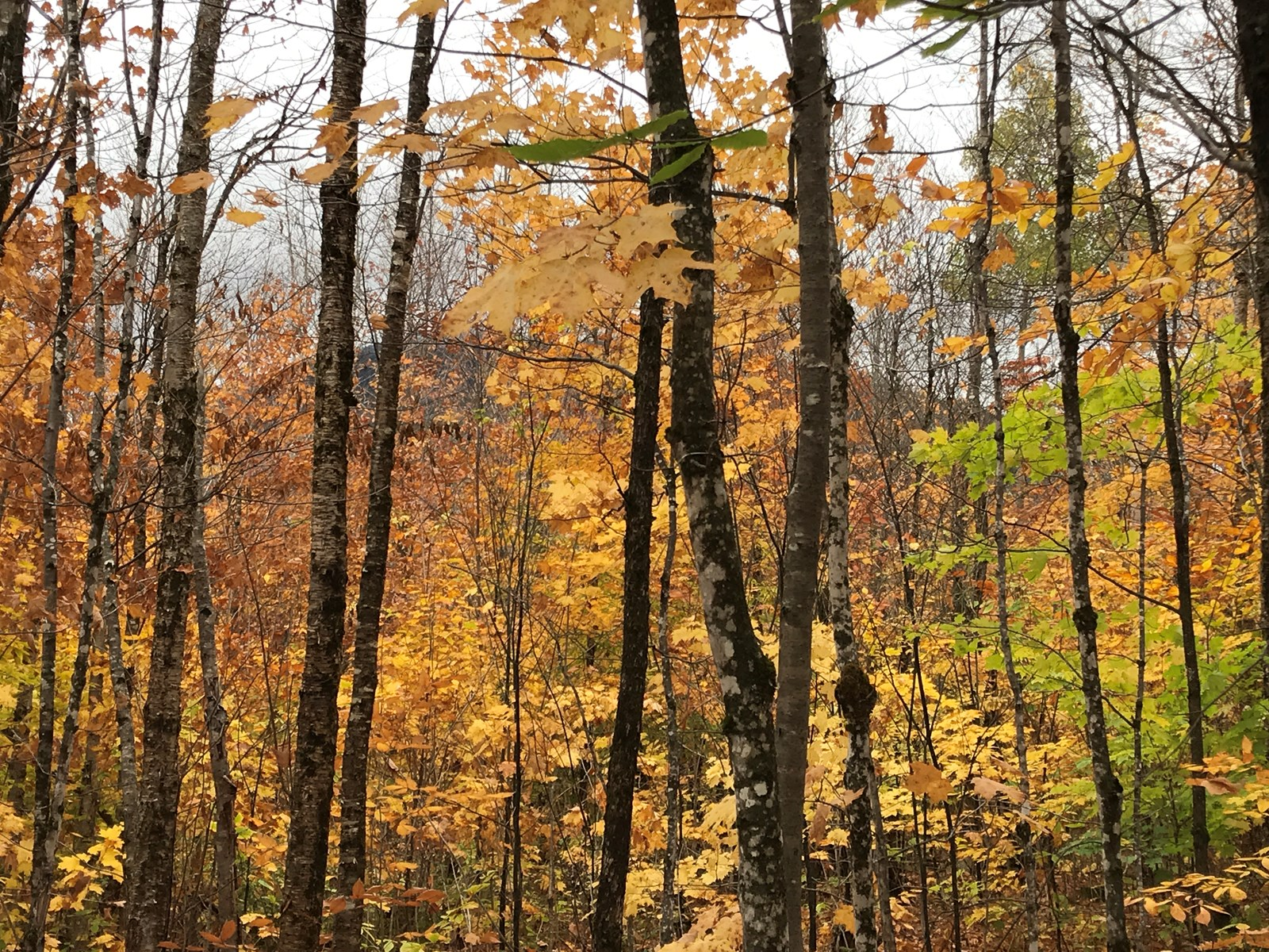 Mature Timber Lot For Sale in Mount Chase, Maine