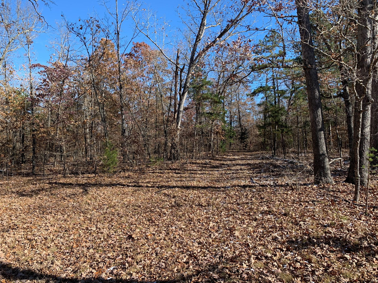 END OF ROAD 38+ ACRES--QUALITY