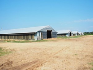 6 HOUSE POULTRY BROILER FARM, 52 ACRES, BOGUE CHITTO, MS