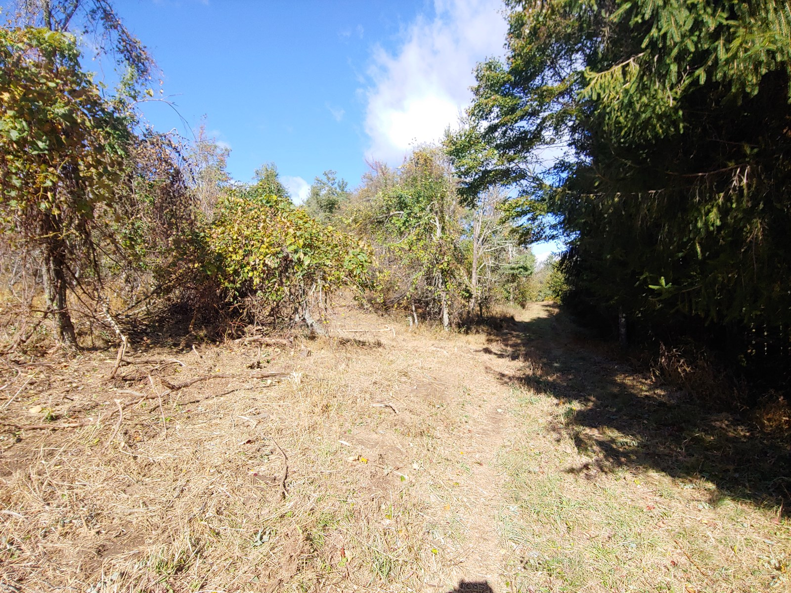 Land for Sale Near the Blue Ridge Parkway in Floyd VA!