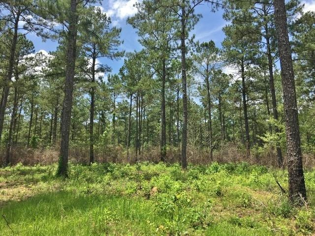 116.46 Acre Hunting Timber Land for for Sale Greensburg, LA