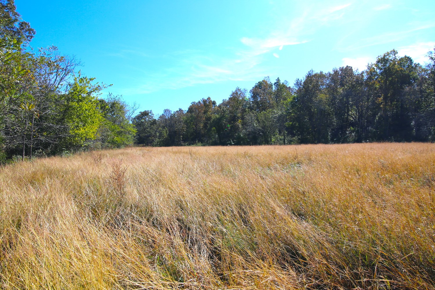 Hunting Land for Sale in Oregon County, Missouri
