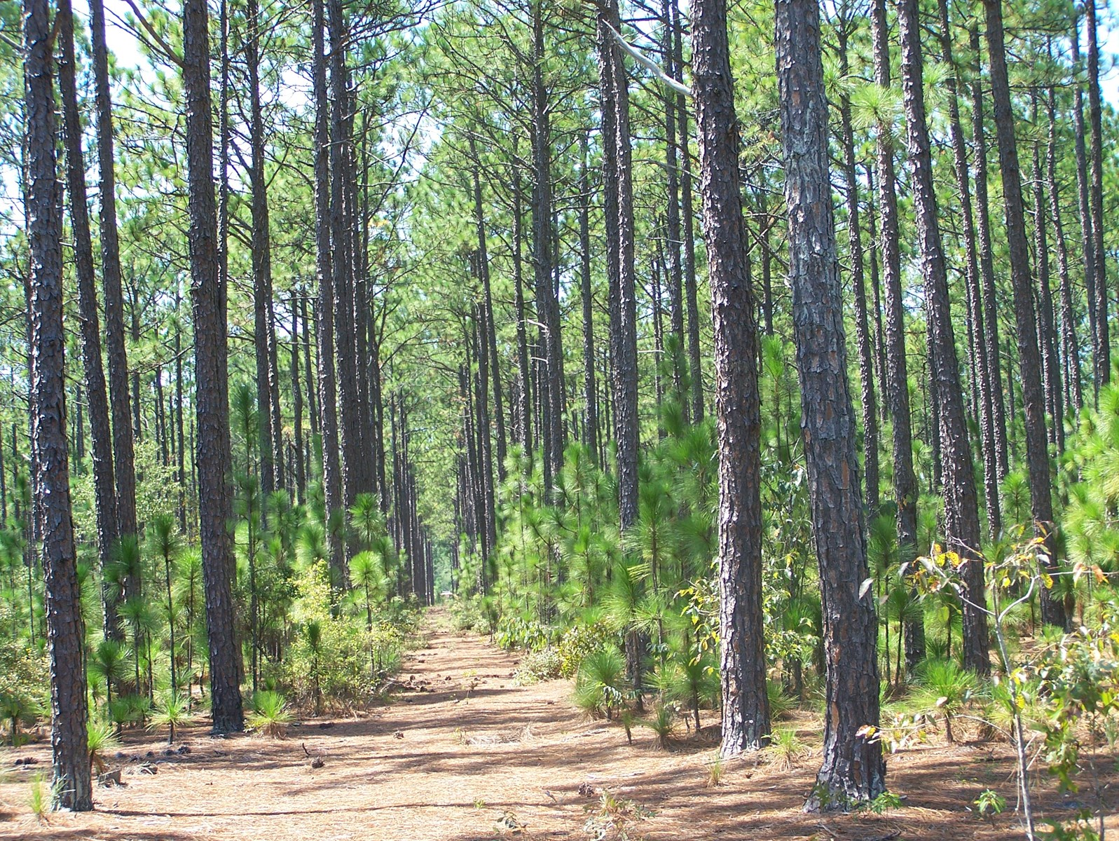 Lexington County, SC Timber Acreage in Expanding Community