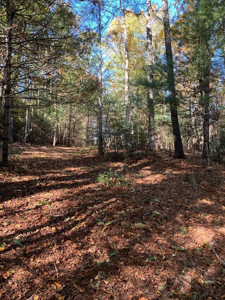 Wooded Lot in Blue Ridge Mountains