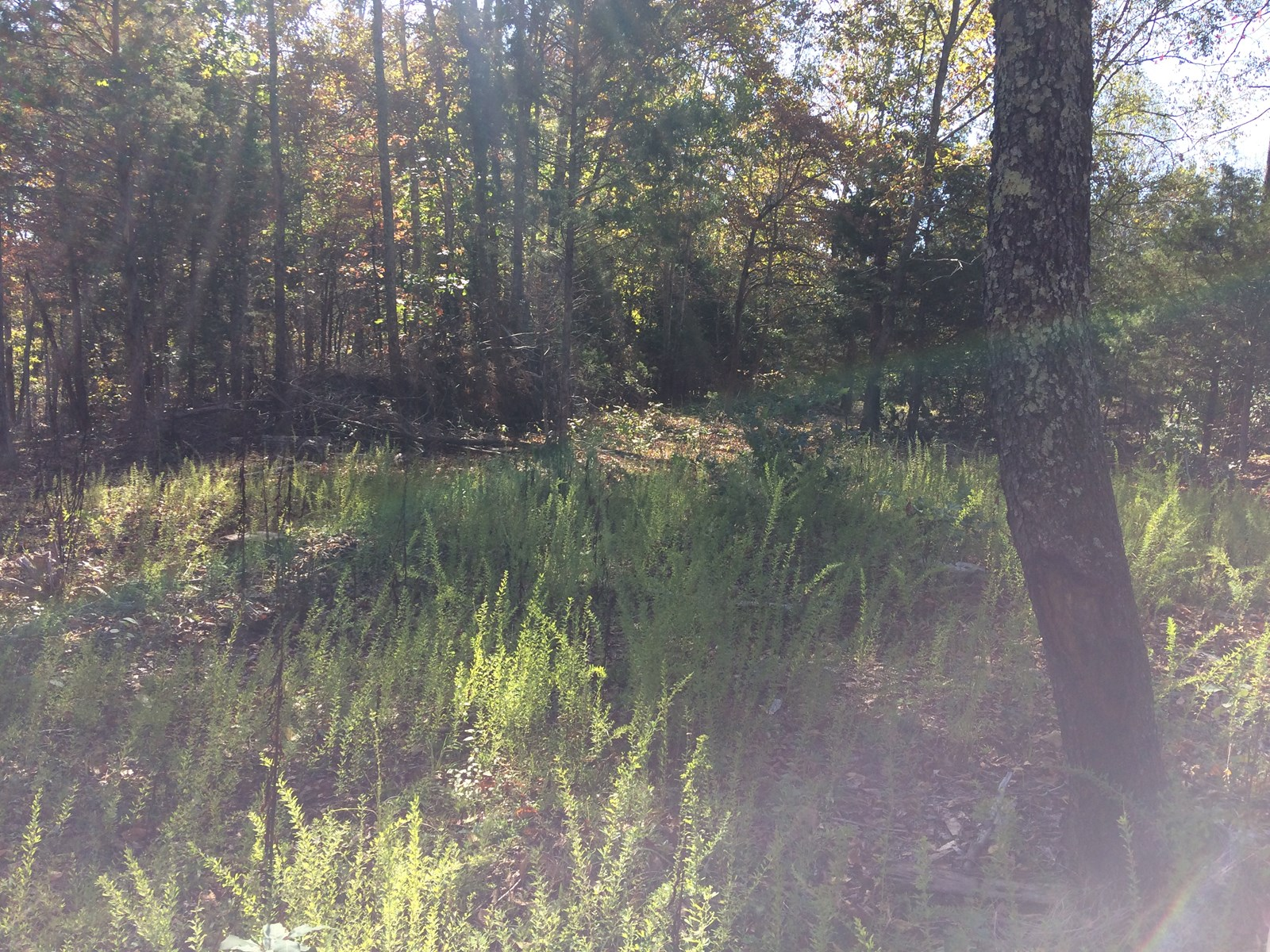 20 ACRES WOODED LAND NEAR MAURY COUNTY TN