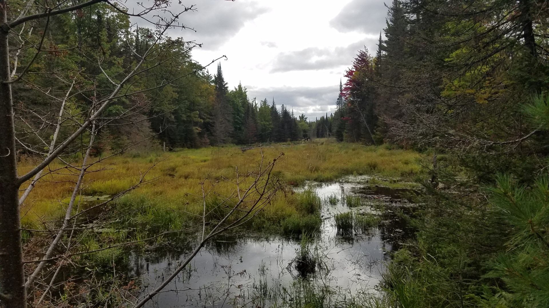 Hunting Land Auction - October 24th  -  160 Acres Marquette